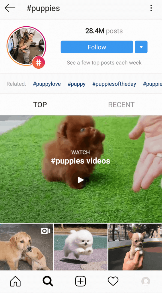 How Trending on Instagram Works - #Puppies Hashtag Top content